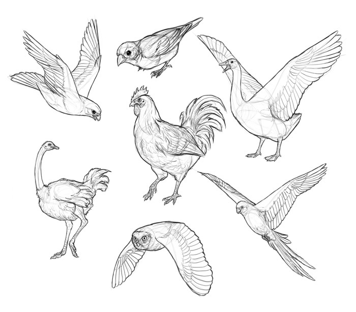 how-to-draw-birds-step-by-step-14
