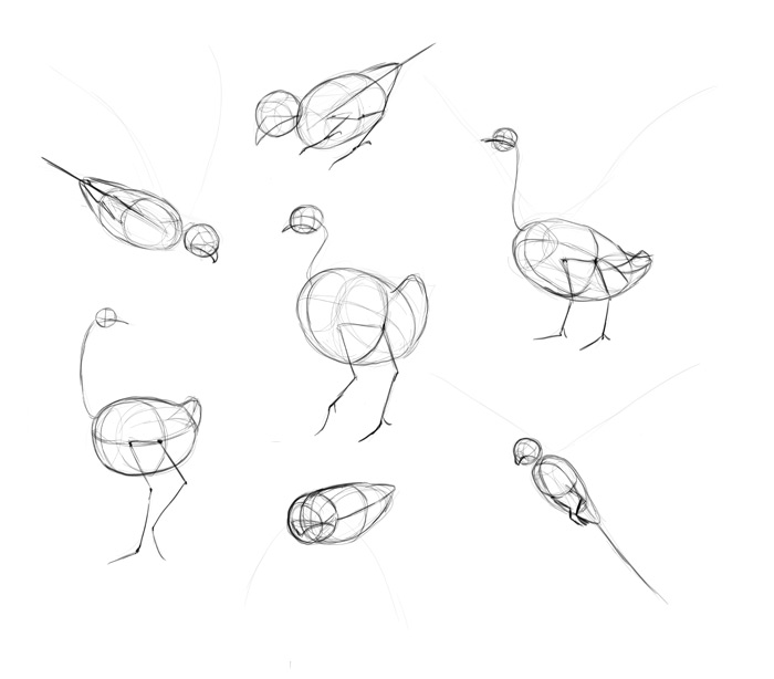 how-to-draw-birds-step-by-step-5