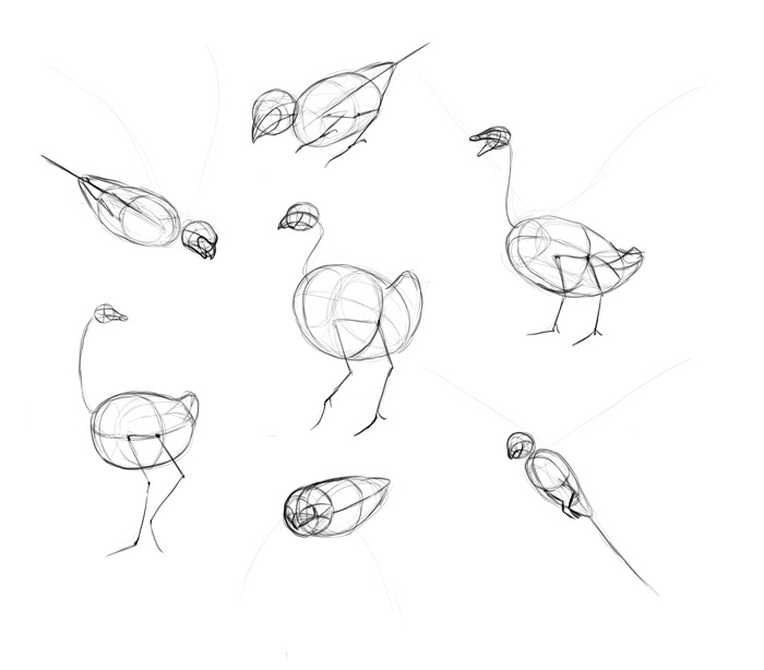 how-to-draw-birds-step-by-step-7
