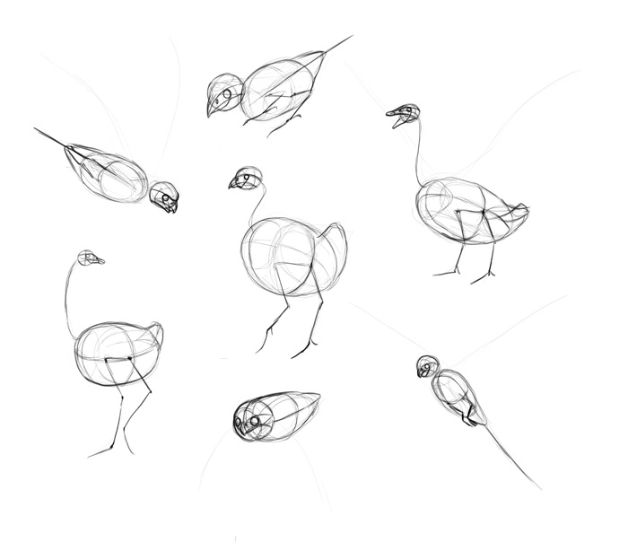 how-to-draw-birds-step-by-step-8