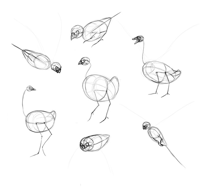 how-to-draw-birds-step-by-step-9