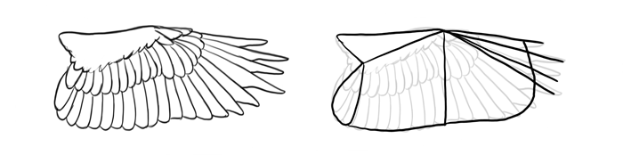 how-to-draw-birds-wings-eagle