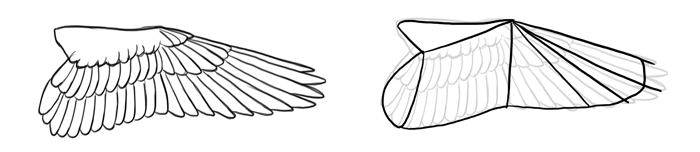 how-to-draw-birds-wings-falcon