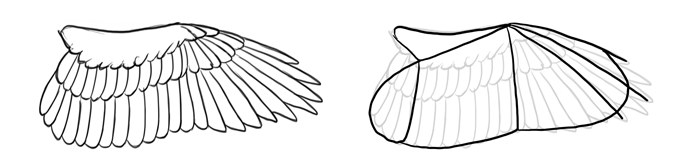 how-to-draw-birds-wings-hawk