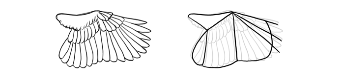 how-to-draw-birds-wings-scratching