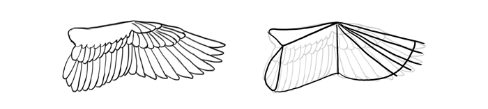 how-to-draw-birds-wings-swimming