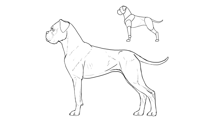 how-to-draw-dogs-breeds-boxer
