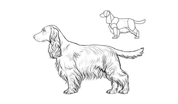 how-to-draw-dogs-breeds-cocker-spaniel