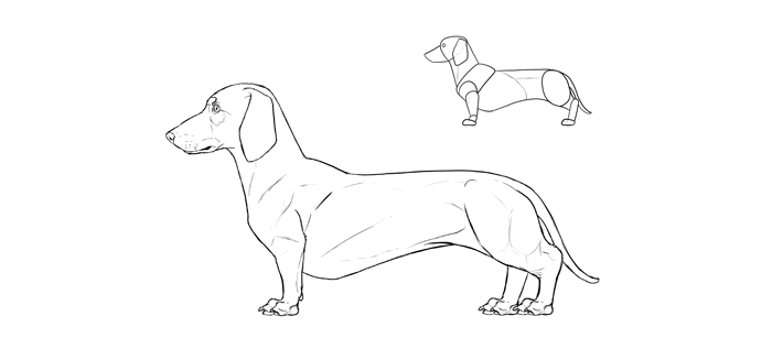 how-to-draw-dogs-breeds-dachshund