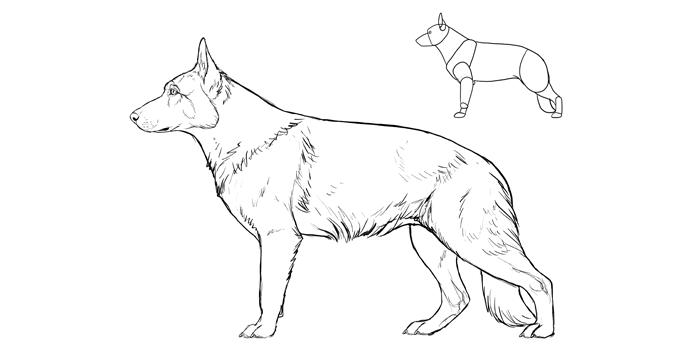how-to-draw-dogs-breeds-german-shepherd