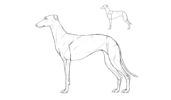 how-to-draw-dogs-breeds-greyhound