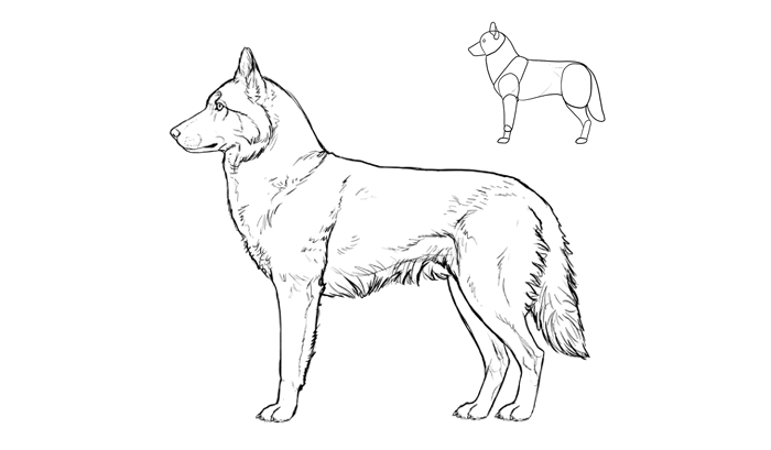 how-to-draw-dogs-breeds-husky
