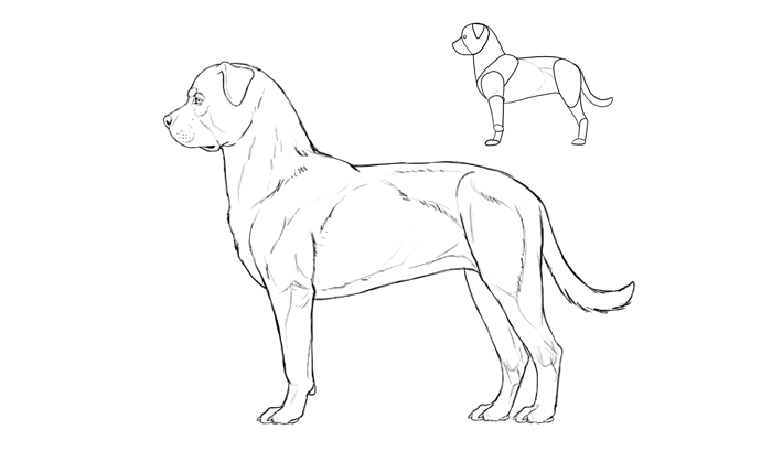 how-to-draw-dogs-breeds-rottweiler