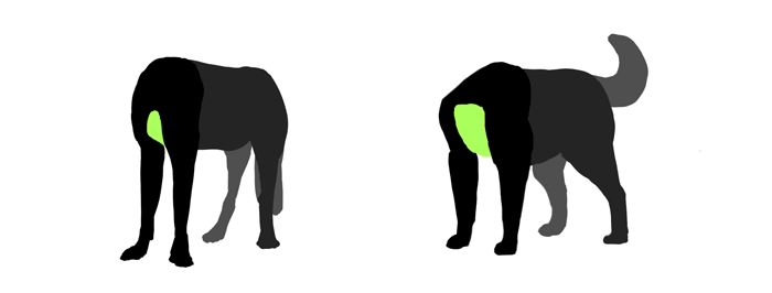 Это изображение имеет пустой атрибут alt; его имя файла - how-to-draw-dogs-dog-wolf-chest-difference.png
