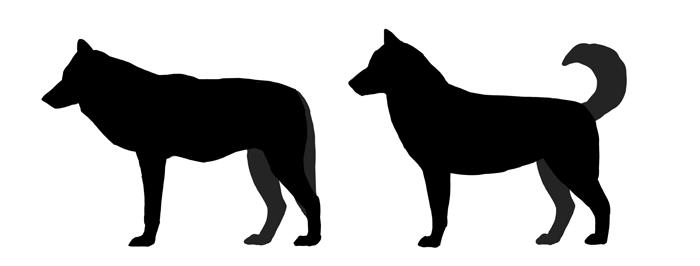 Это изображение имеет пустой атрибут alt; его имя файла - how-to-draw-dogs-dog-wolf-silhouette-difference.png