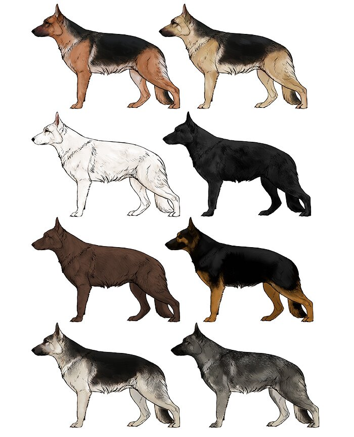 how-to-draw-dogs-german-shepherd-colors
