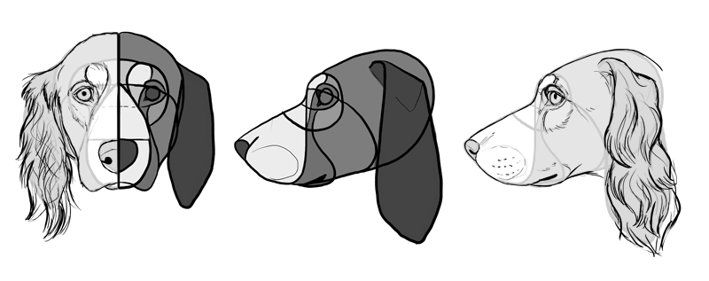 how-to-draw-dogs-head-cocker-spaniel