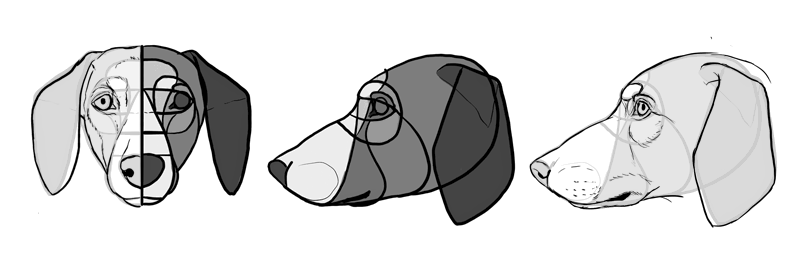 how-to-draw-dogs-head-dachshund