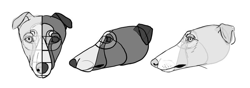 how-to-draw-dogs-head-greyhound