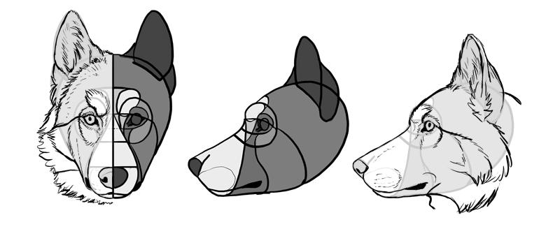 how-to-draw-dogs-head-husky