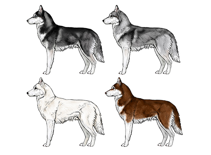 how-to-draw-dogs-husky-colors