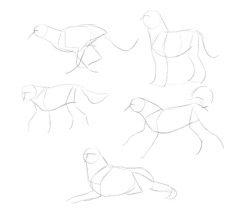how-to-draw-dogs-process-1