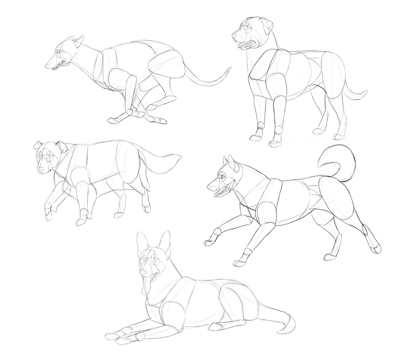 how-to-draw-dogs-process-2