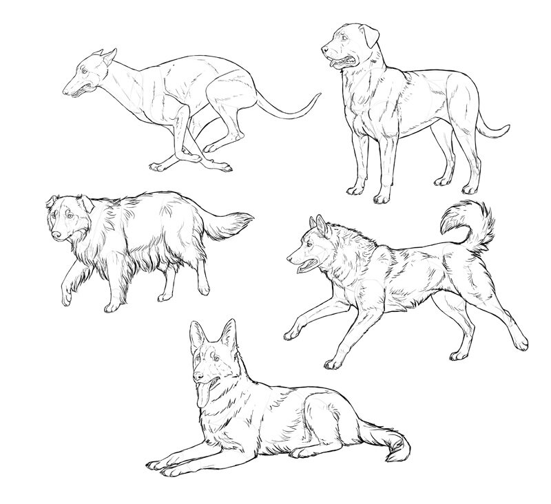 how-to-draw-dogs-process-3