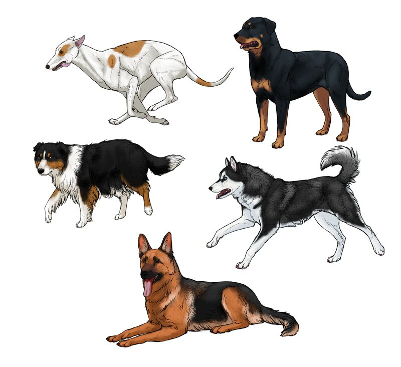 how-to-draw-dogs-process-4