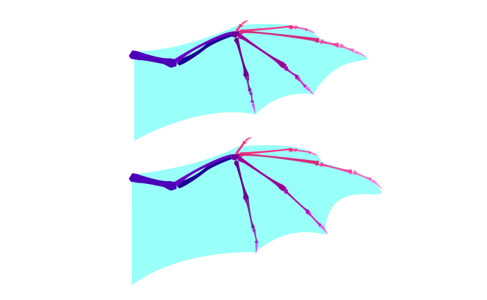 the similarity of dragon wings to bat wings