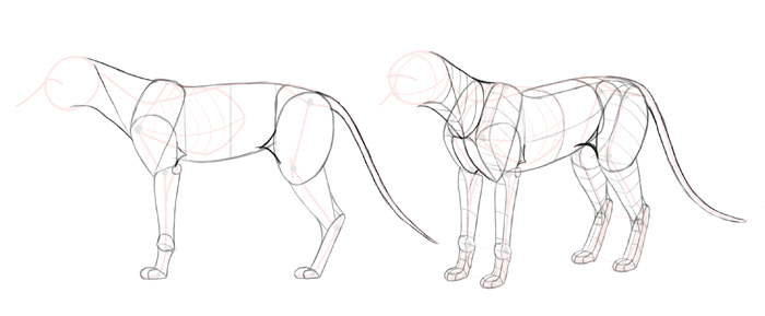 how-to-draw-foxes-body-6