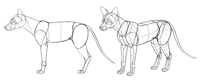 how-to-draw-foxes-body-8