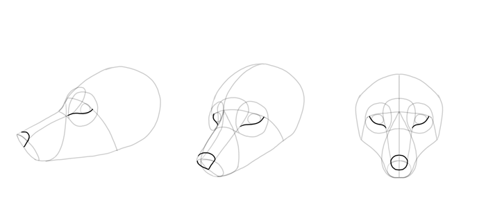 how-to-draw-foxes-head-10