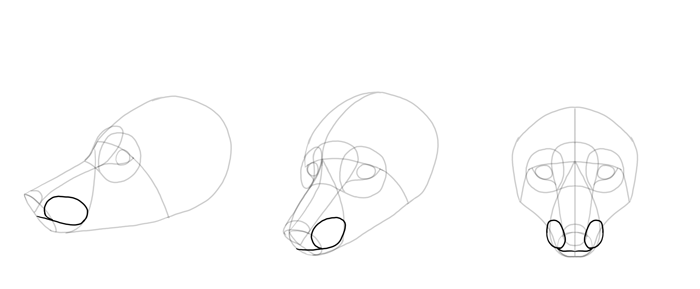 how-to-draw-foxes-head-11
