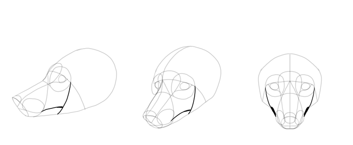 how-to-draw-foxes-head-12
