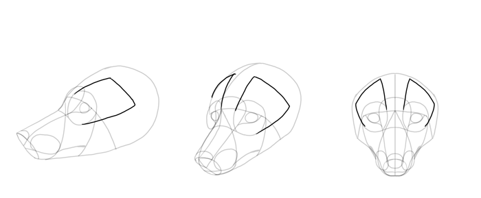 how-to-draw-foxes-head-13