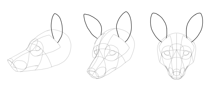 how-to-draw-foxes-head-14