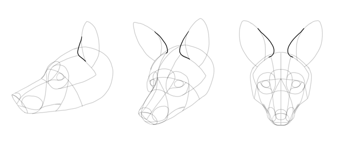 how-to-draw-foxes-head-15
