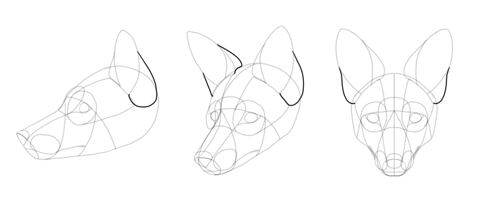 how-to-draw-foxes-head-16