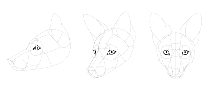 how-to-draw-foxes-head-17