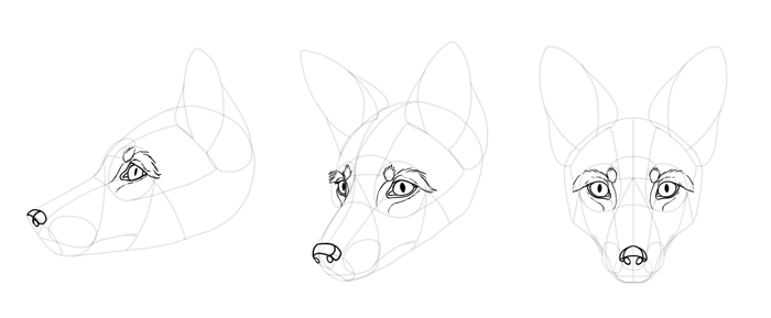 how-to-draw-foxes-head-20