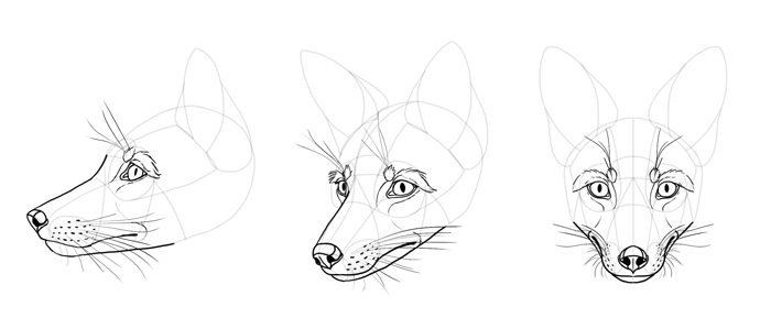 how-to-draw-foxes-head-23