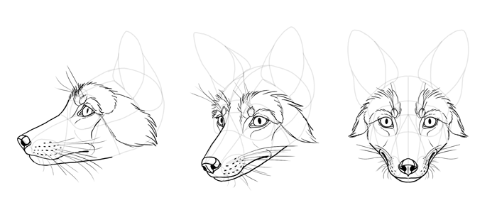 how-to-draw-foxes-head-24