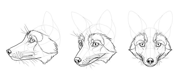 how-to-draw-foxes-head-25