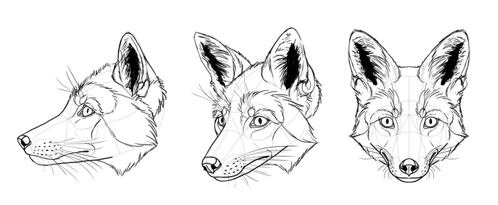 how-to-draw-foxes-head-26