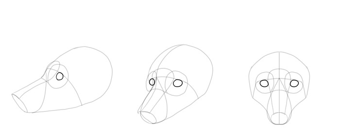 how-to-draw-foxes-head-9