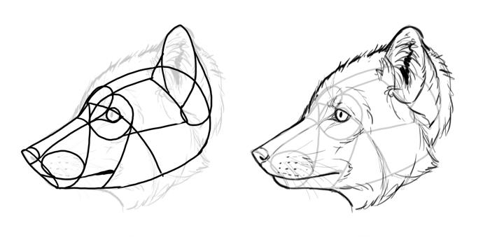 how-to-draw-foxes-species-arctic-fox