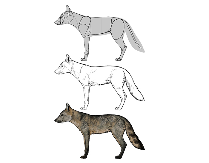 how-to-draw-foxes-species-body-crab-eating0fox