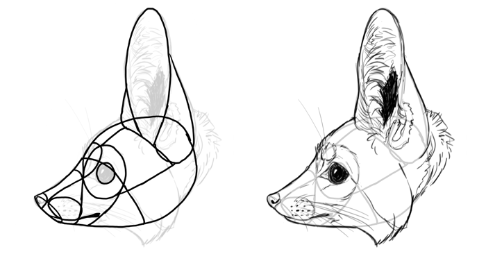 how-to-draw-foxes-species-fennec