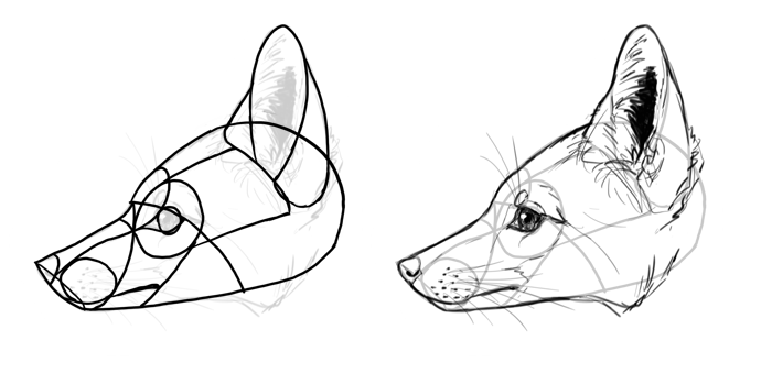 how-to-draw-foxes-species-it-fox